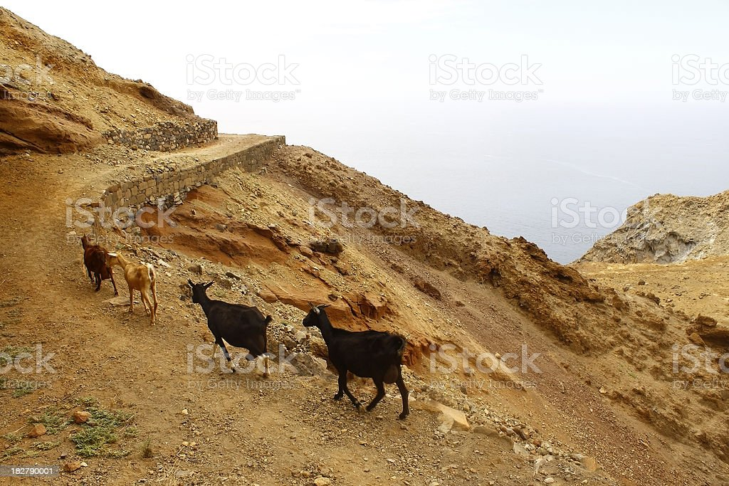 Goats on the mountain path royalty-free stock photo