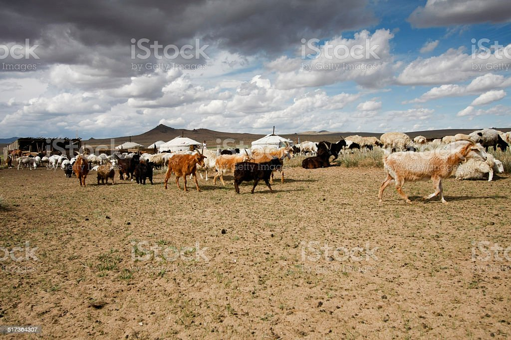 Goats on the steppes stock photo