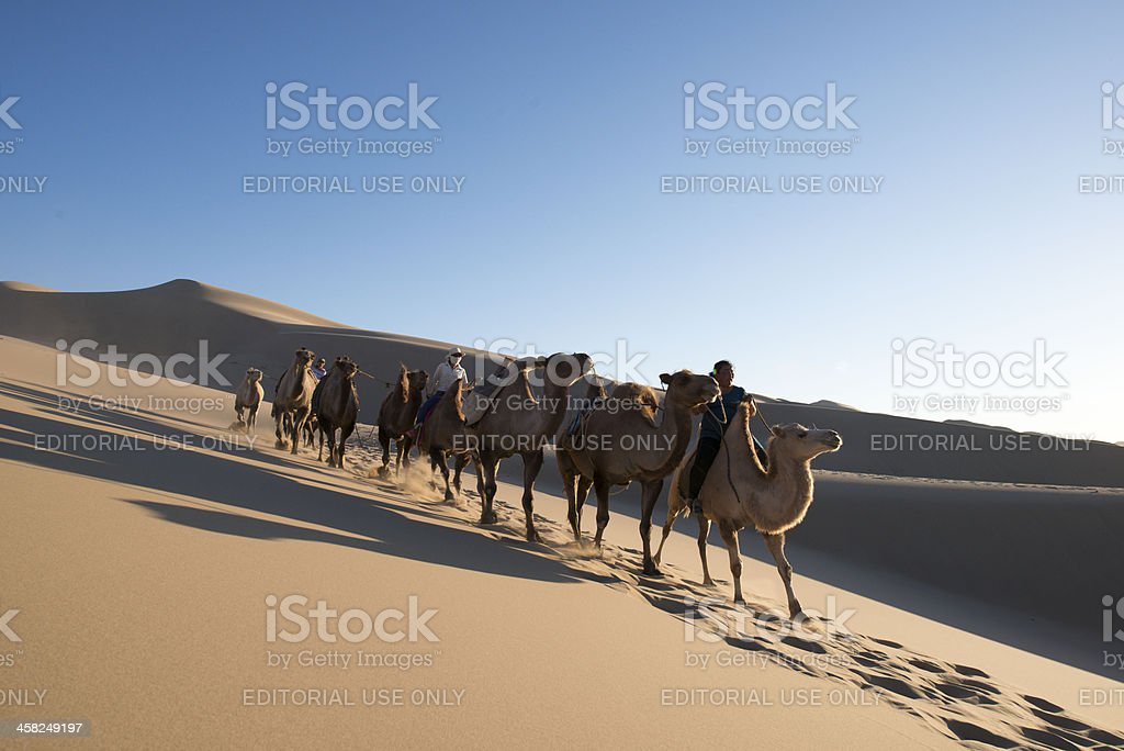 Gobi Desert and Camels are coming stock photo