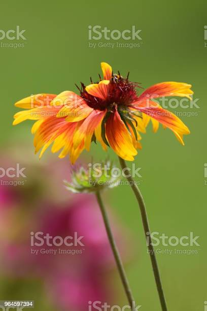 Photo of Goblin Flower Close Up