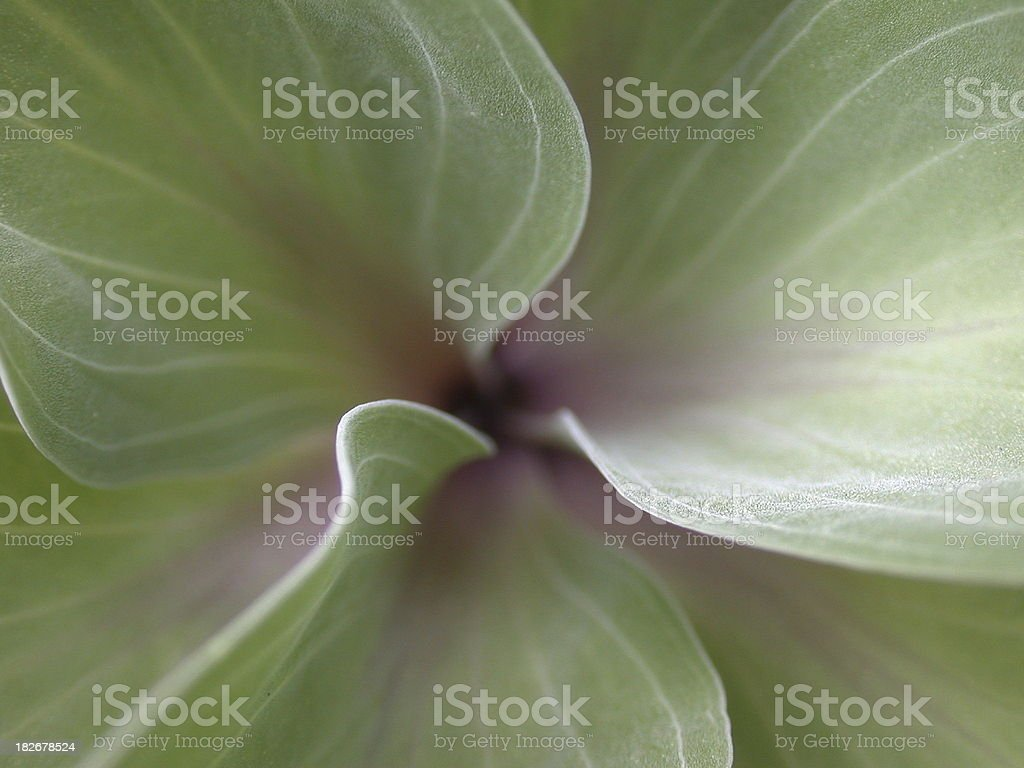 Goddes spiral stock photo