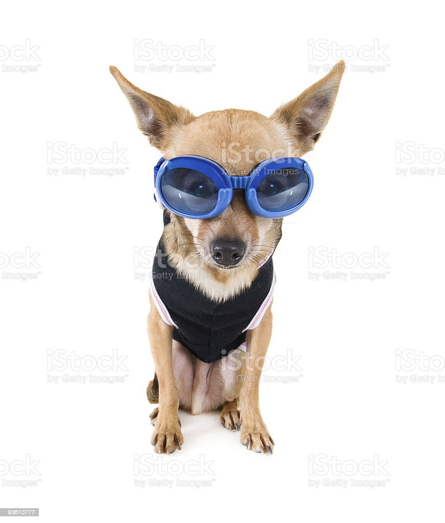 goggle dog royalty-free stock photo