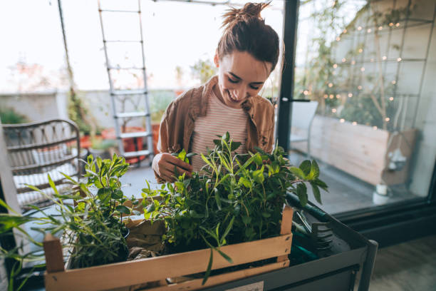 Going green! Young woman setting up and arranging greenery on her building terrace gardening stock pictures, royalty-free photos & images