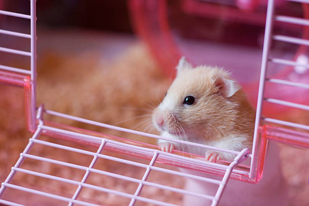 going out  rodent stock pictures, royalty-free photos & images