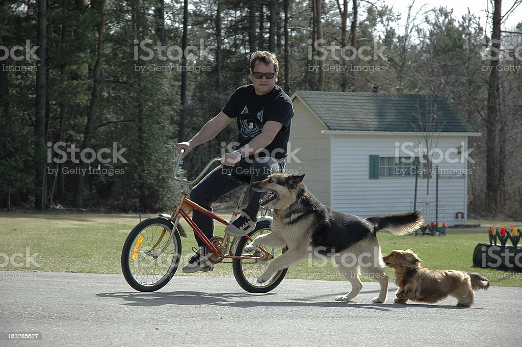 Going to the dogs royalty-free stock photo