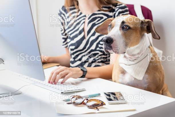 Going to work with pets concept cute dog with female owner in front picture id1028916978?b=1&k=6&m=1028916978&s=612x612&h=nw7k0vv a i i3kwivv8ubg urbrduh64ogrul bu9a=