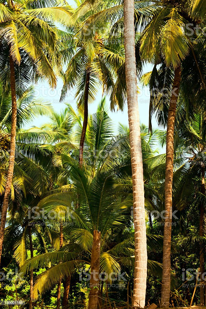 Gokarna beach royalty-free stock photo