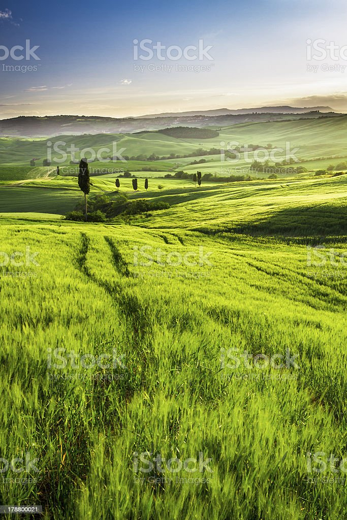 Gold and green fields in the valley at sunset, Tuscany royalty-free stock photo
