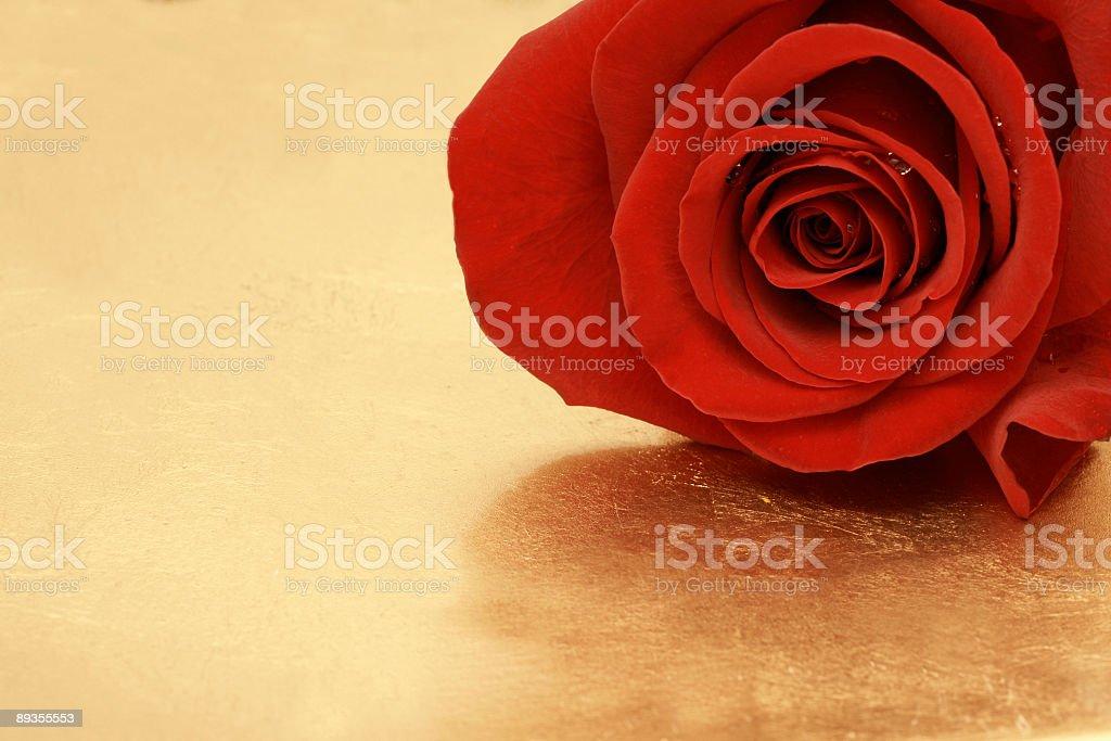 Gold Background with Red Rose and Copy Space royaltyfri bildbanksbilder