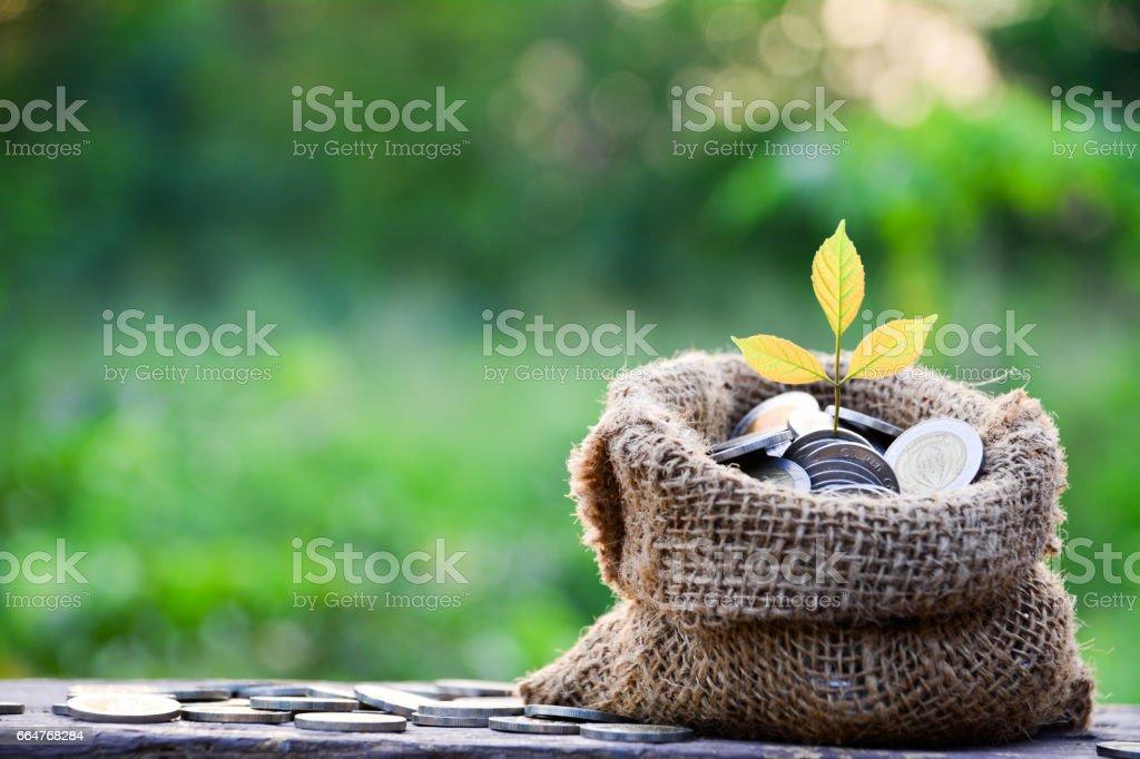 Goldmünzen mit Baum und Sack Tasche – Foto