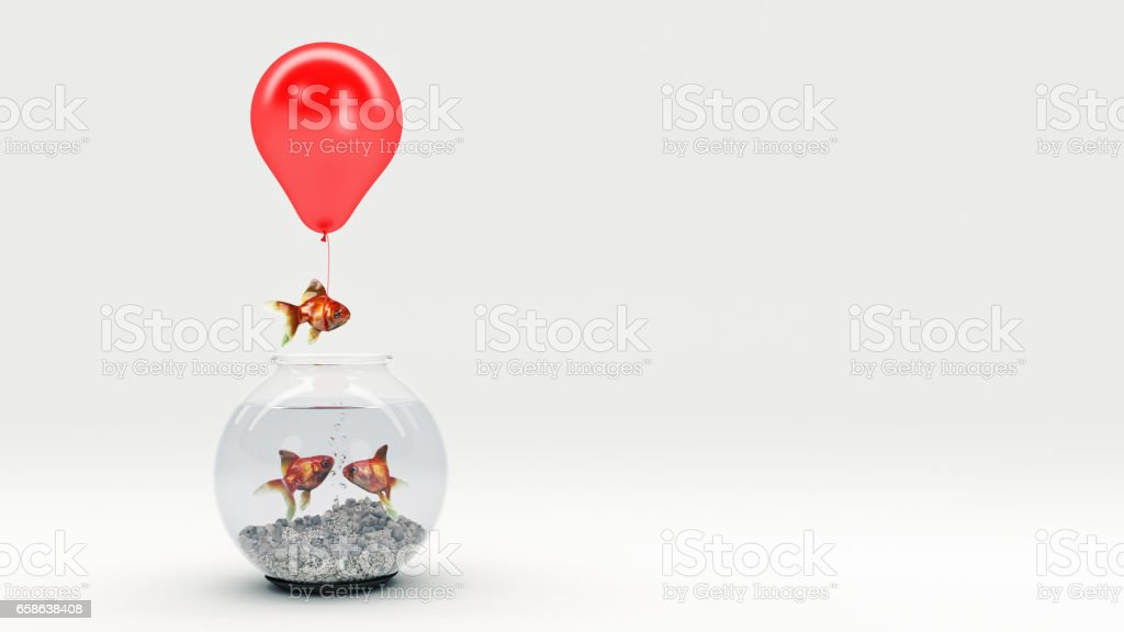 Peixe dourado voando longe um aquário com a ajuda de um balão. - foto de acervo