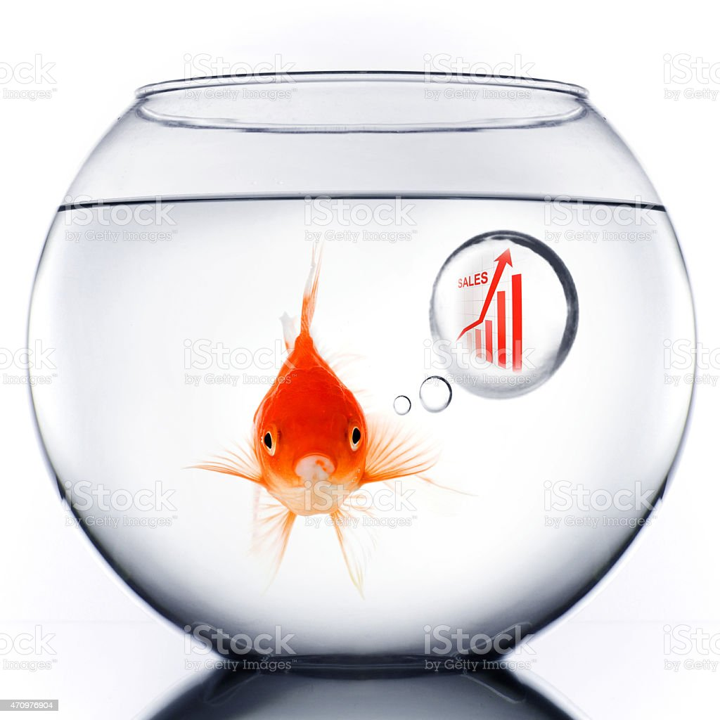 A gold fish in a fish bowl thinking about sales stock photo