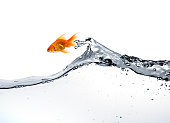 [color=orange][size=11]goldfish jumping out of the water, isolated on white, see also: [url=http://www.istockphoto.com/file_search.php?action=file&lightboxID=7298298]GOLDFISH LIGHTBOX  [img]/file_thumbview_approve.php?size=1&id=11121004[/img][img]/file_thumbview_approve.php?size=1&id=11104585[/img][img]/file_thumbview_approve.php?size=1&id=11110759[/img][/url]