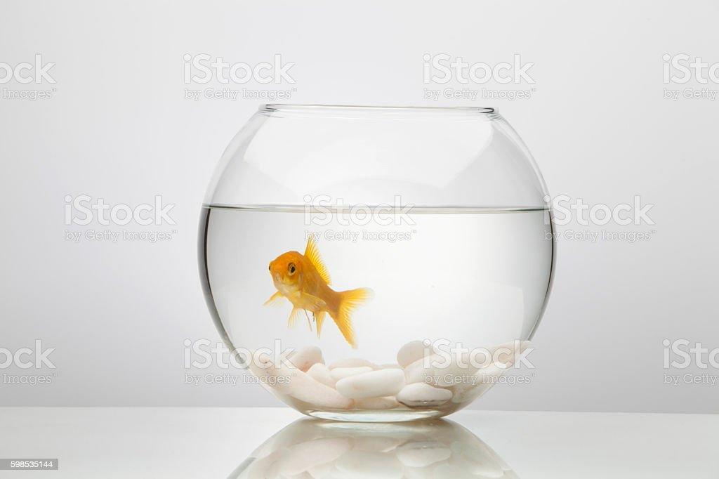 Or poissons en verre bol photo libre de droits