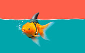 Goldfish with shark fin swim in green water and red sky, Gold fish with shark flip