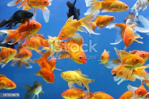 In an aquarium.