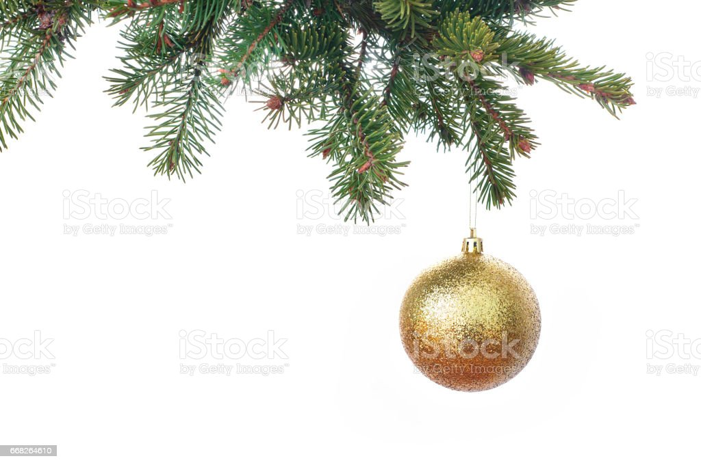 Gold glitter Christmas baubles hanging from the branch of a fir tree isolated against white - foto de acervo