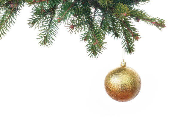 Gold glitter Christmas baubles hanging from the branch of a fir tree isolated against white stock photo