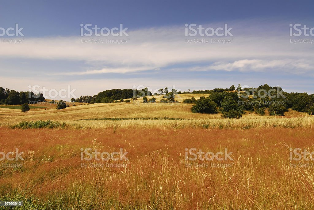 gold grass on the mountain royalty-free stock photo