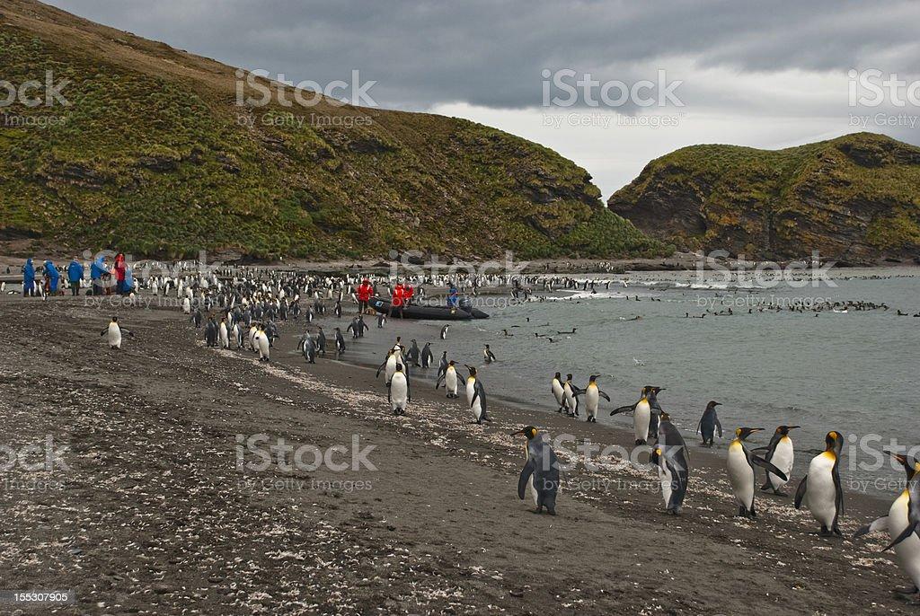 Gold Harbor Penguin rookery stock photo