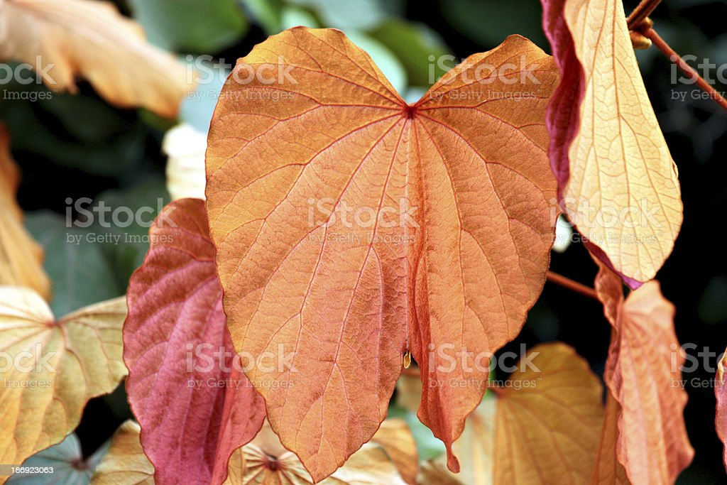 Gold leaf in the garden. royalty-free stock photo