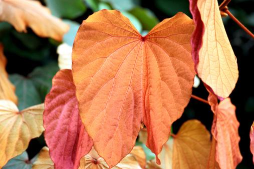 Gold leaf in the garden.