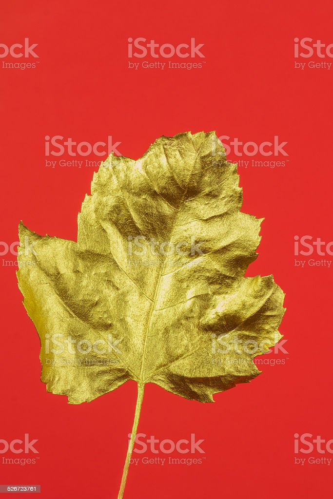 Gold leaf on red background stock photo