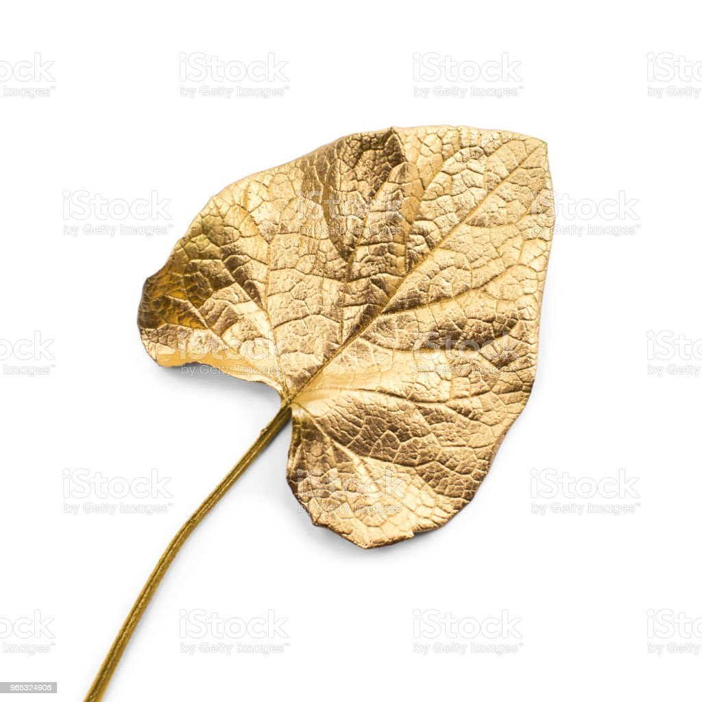 Gold leaf on white background royalty-free stock photo