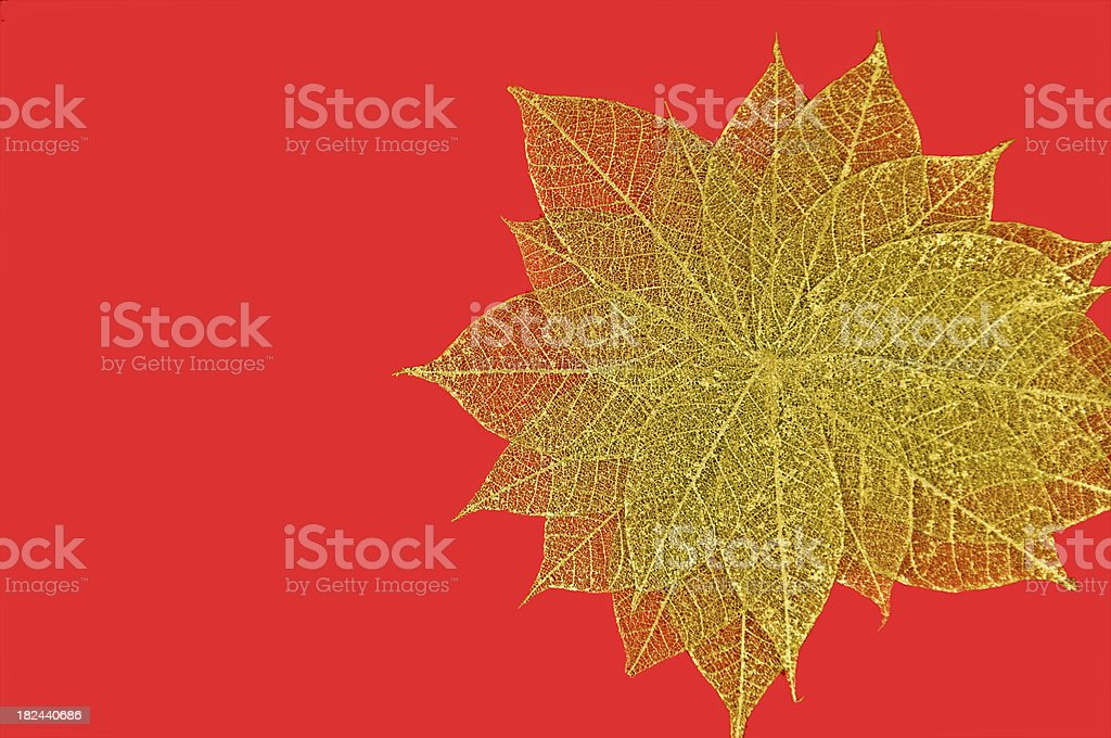 Gold Leaf Skeletons on Red royalty-free stock photo