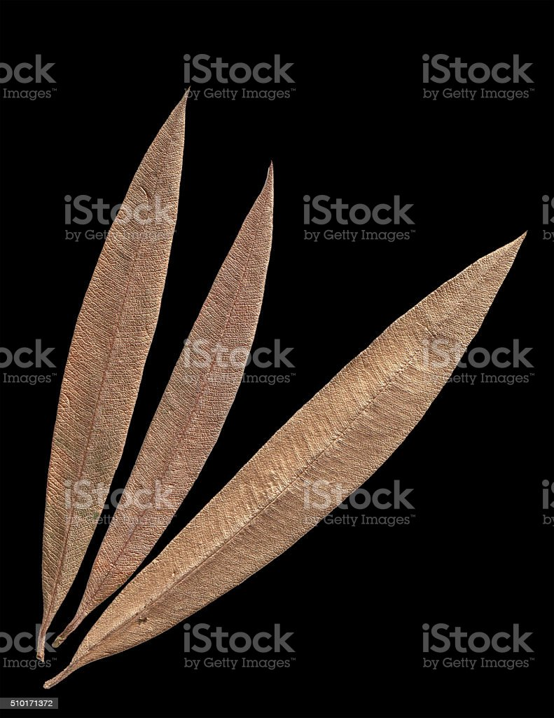 Gold leaves  on black background stock photo