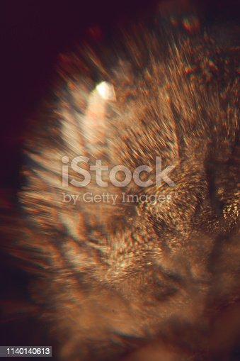 886746424istockphoto Gold light leaks 1140140613