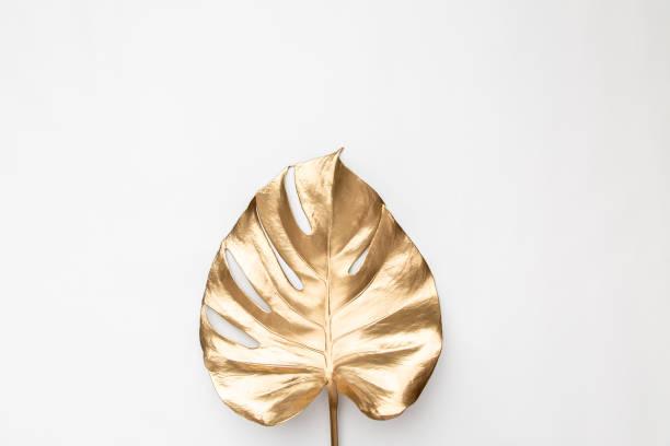 feuille de monstera d'or sur le fond blanc - couleur des végétaux photos et images de collection