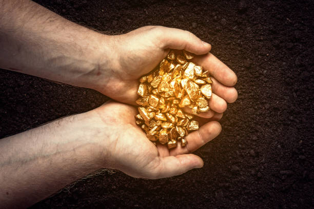 gold nuggets the hands of the miner.  the working hands of a peasant with pure gold. top view - gold mine stock photos and pictures