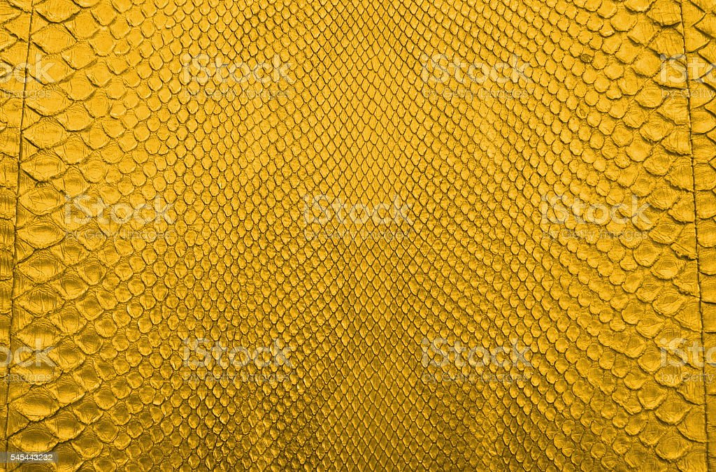 Gold Python Snake skin texture background. stock photo