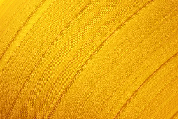 Gold record background stock photo