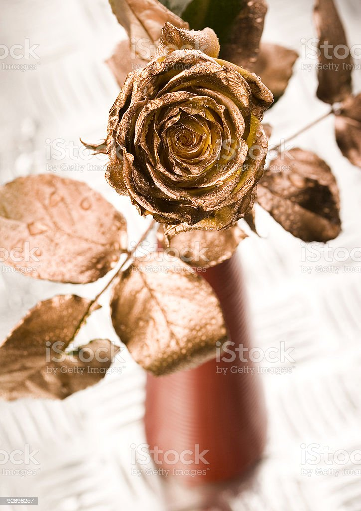 Gold rose royalty-free stock photo