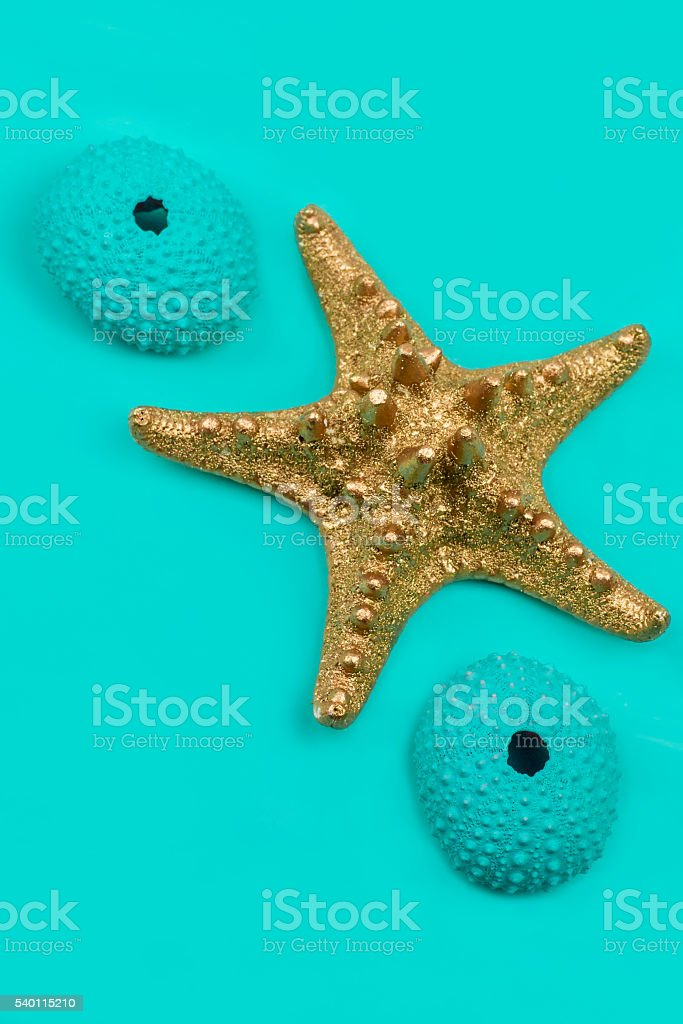 Gold Starfish and Blue Sea Urchins on Blue Background stock photo
