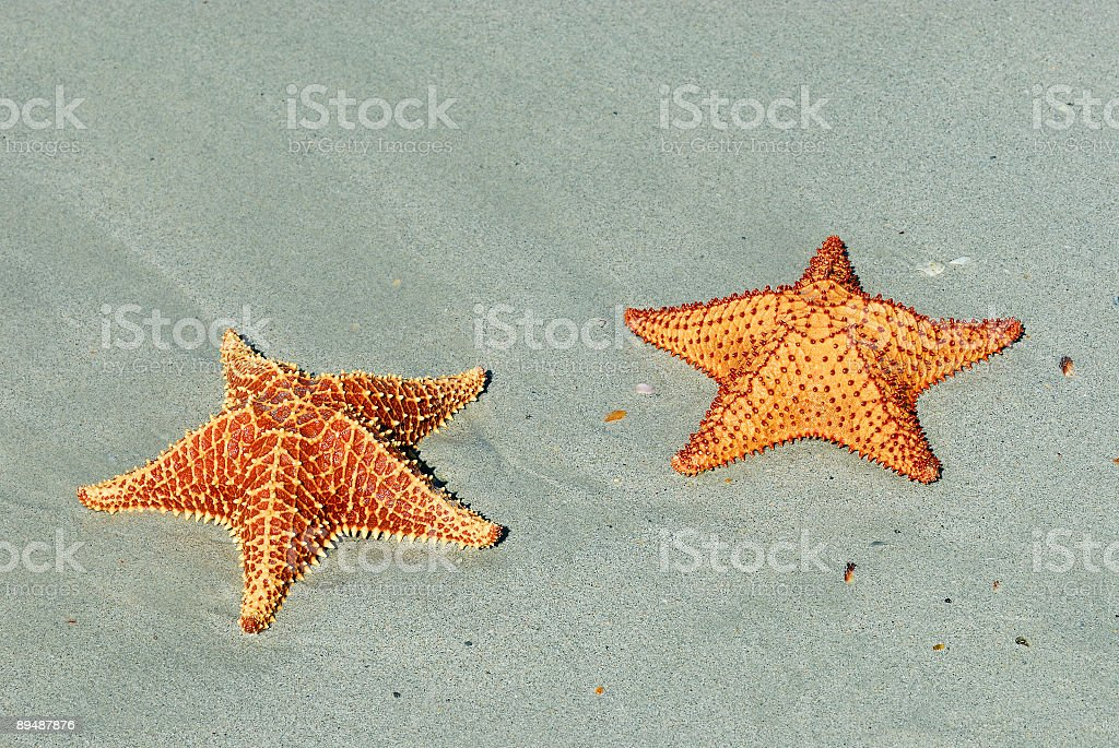 Gold Stars royalty-free stock photo