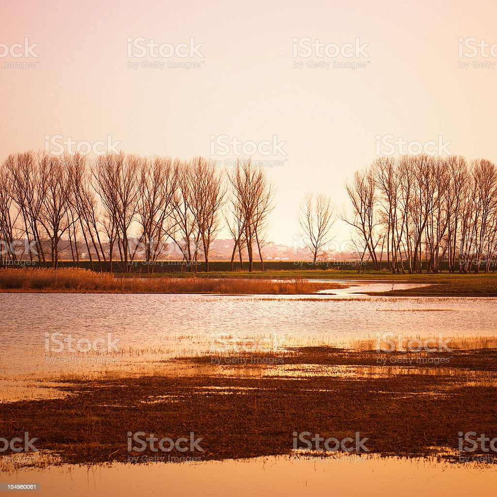 Gold swamp at sunset - Reflection on the water royalty-free stock photo