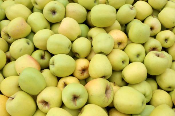 pommes dorées. france. - golden photos et images de collection