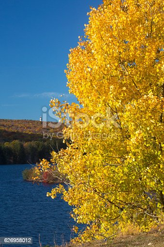 Vivid yellow aspen foliage on shore of West Hartford Reservoir in Connecticut, with the Heublein Tower in the background.