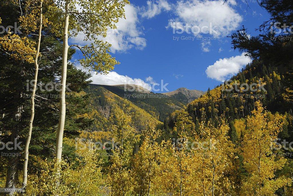 Golden Aspen in the Mountains stock photo