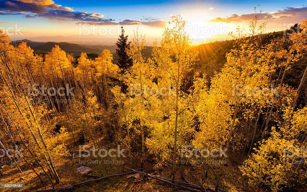 Golden Aspen Sunset stock photo