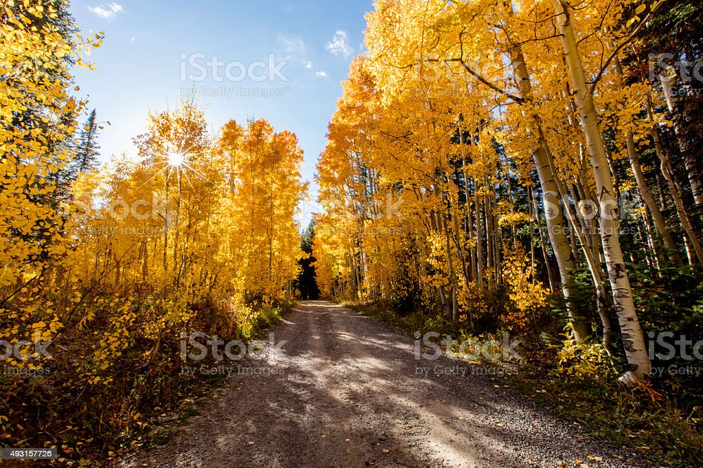 Golden Aspen Trees stock photo