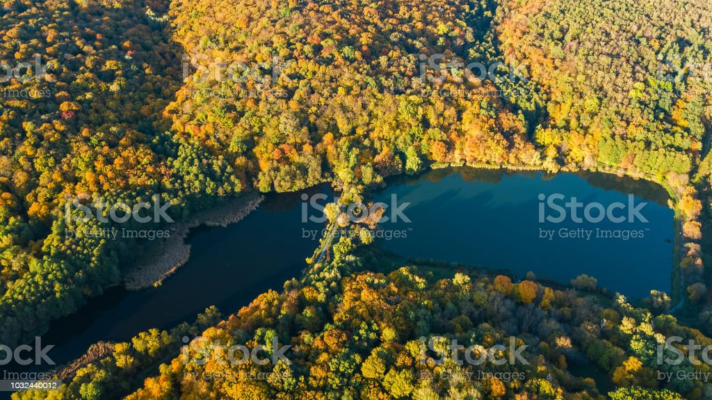 Golden autumn background, aerial view of forest with yellow trees and...