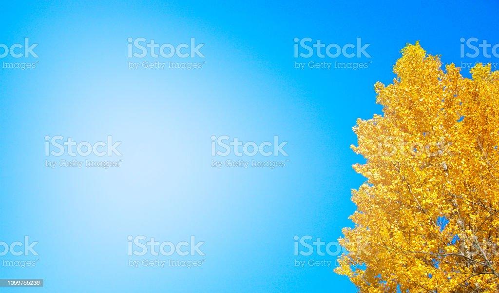 Modelo de banner outono, dourado com grande lugar para texto - foto de acervo