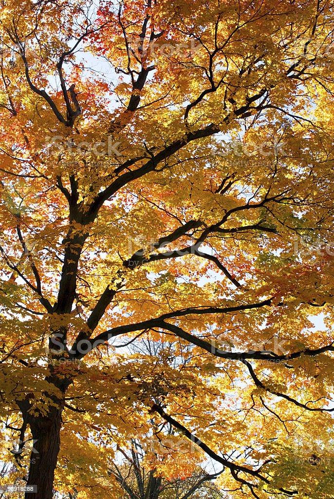 Golden Autumn Branches royalty-free stock photo