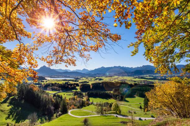 goldener herbst im wald mit sonnenschein in region allgäu - allgäu stock-fotos und bilder