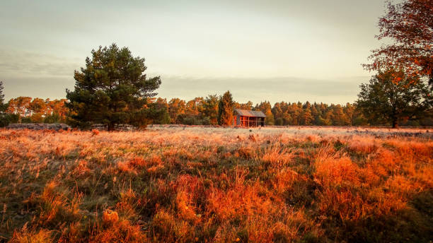 Golden autumn in the Lüneburg Heath Golden autumn in the Lüneburg Heath near Undeloh lüneburg stock pictures, royalty-free photos & images