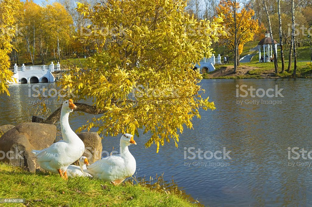 Golden autumn on the pond – Foto